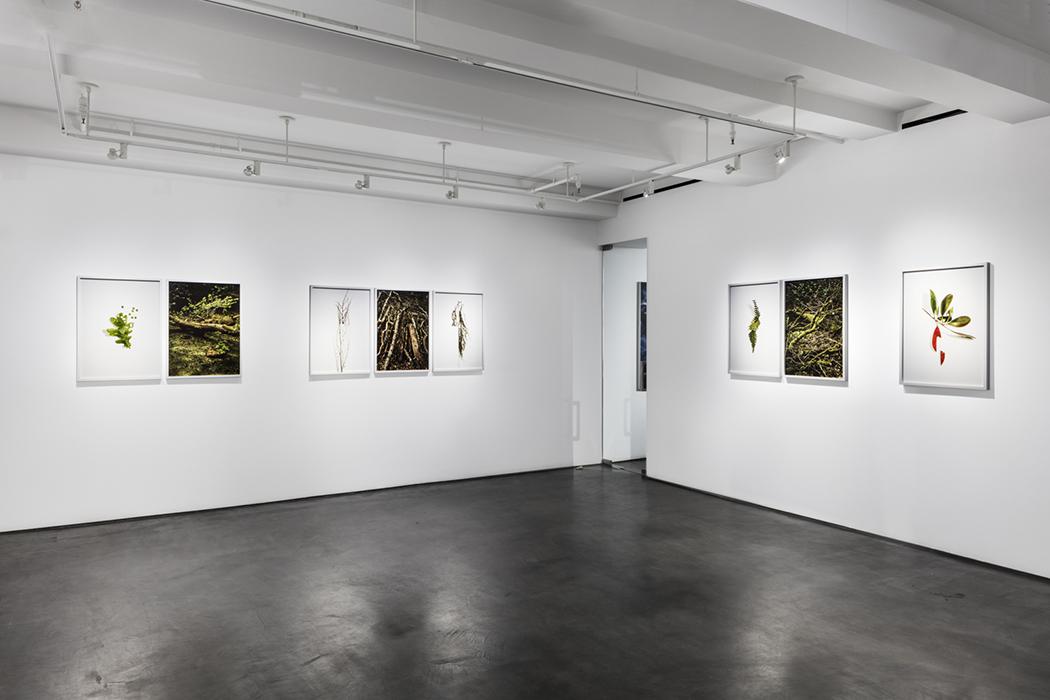 Galerie Benrubi, New York, 2018